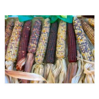 Autumn Corn Postcard