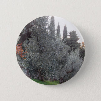 Autumn countryside with olive trees Tuscany, Italy 2 Inch Round Button