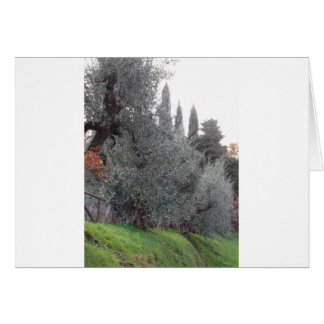 Autumn countryside with olive trees Tuscany, Italy Card