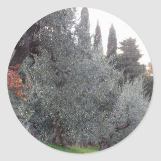 Autumn countryside with olive trees Tuscany, Italy Classic Round Sticker