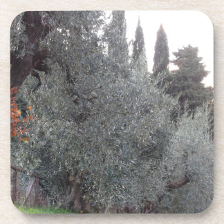 Autumn countryside with olive trees Tuscany, Italy Coaster