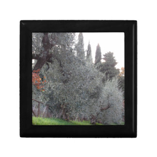 Autumn countryside with olive trees Tuscany, Italy Gift Box