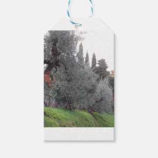 Autumn countryside with olive trees Tuscany, Italy Gift Tags