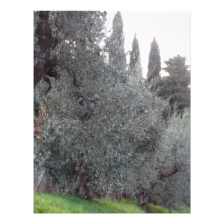 Autumn countryside with olive trees Tuscany, Italy Letterhead