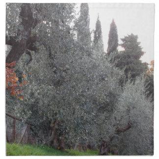 Autumn countryside with olive trees Tuscany, Italy Napkin