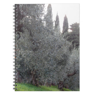 Autumn countryside with olive trees Tuscany, Italy Notebook
