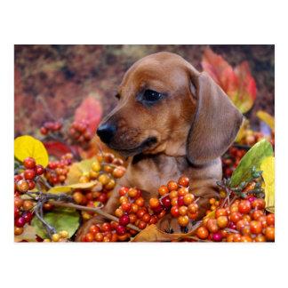Autumn Dachshund Puppy Postcard