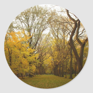 Autumn Elm Trees in Central Park, New York City Round Sticker