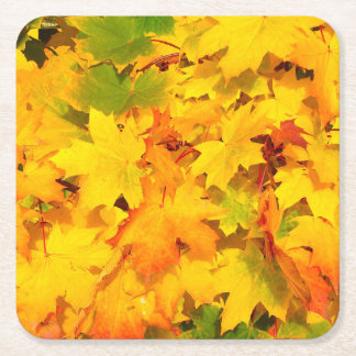 Autumn Escapes Paper Coasters (set:6)