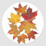 Autumn Falling Leaves Round Stickers