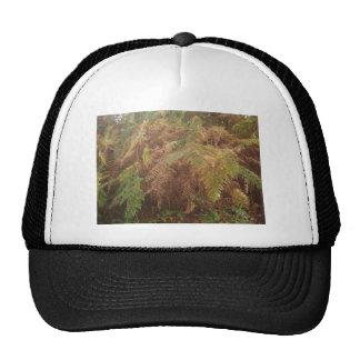 Autumn ferns trucker hat