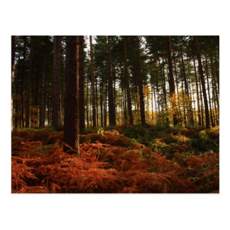 Autumn Ferns Postcard