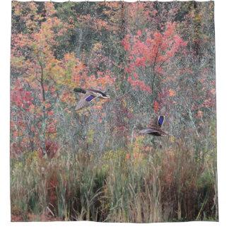 Autumn Foliage and Mallard Ducks
