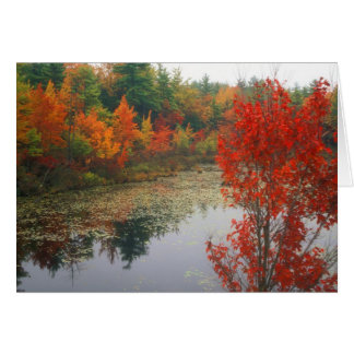 Autumn Foliage at Lake Card