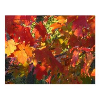 Autumn Foliage - Boston, MA Postcard
