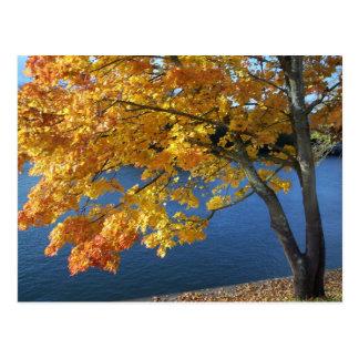 Autumn foliage scene postcard