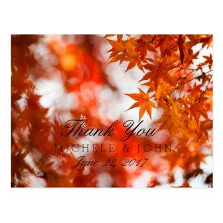 Autumn foliage/Thank You Postcard