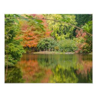Autumn gardens - Photo Print