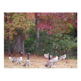 Autumn Geese with Red and Orange Fall Leaves Postcard
