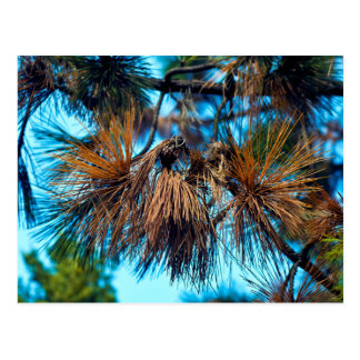 Autumn Gefflüster in the jaw forest Postcard