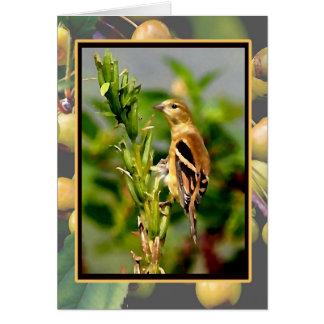 Autumn Goldfinch & Crabapples Notecard