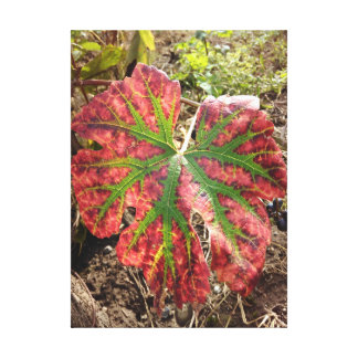 Autumn Grape Leaf Canvas Print