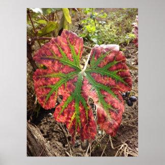 Autumn Grape Leaf Poster