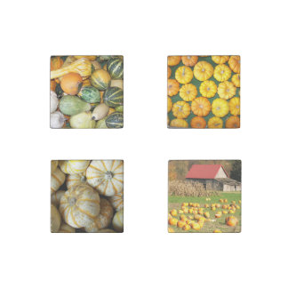 Autumn Harvest Squash Photo Stone Magnets