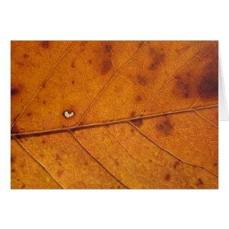 Autumn Heart Leaf   Blank Photo Card