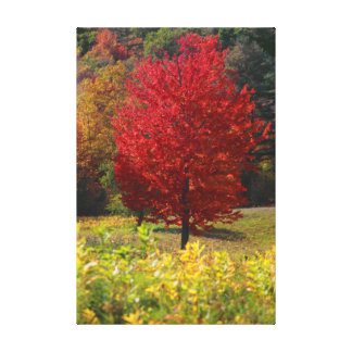 Autumn Home Gifts | Red Maple Leaves Stretched Canvas Print