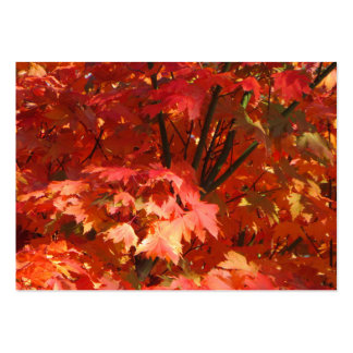 Autumn in Canberra Pack Of Chubby Business Cards