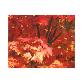Autumn in Canberra Canvas Prints