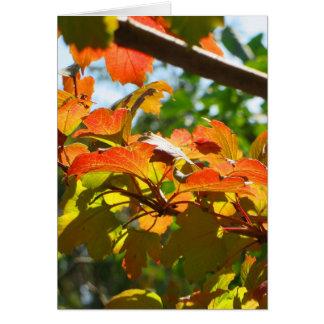 Autumn in Canberra Note Card