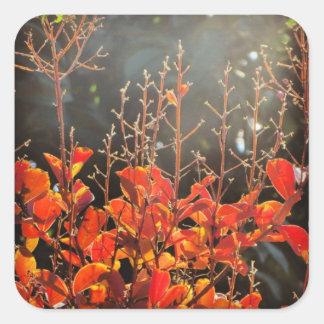 Autumn in Canberra Square Sticker