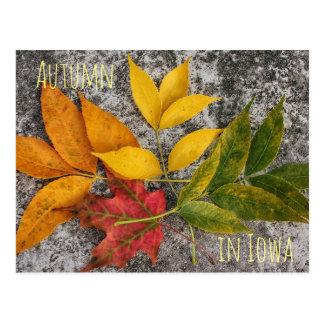 Autumn in Iowa Postcard