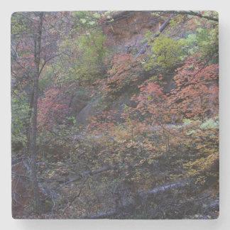 Autumn in Sedona Stone Coaster