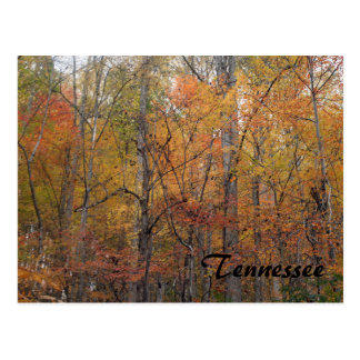 Autumn in Tennessee Postcard