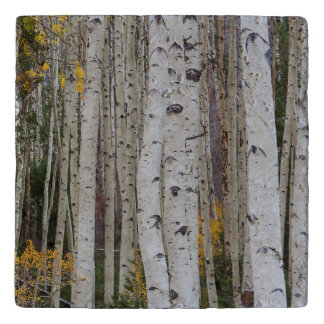 Autumn in the Aspen's Trivet