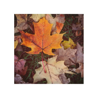 Autumn in Vancouver Wood Wall Art