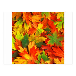 Autumn Kaleidoscope Of Postcard