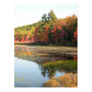 Autumn Lake 2 Postcard