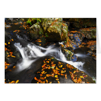 Autumn Landscape at Spruce Flats Falls Card