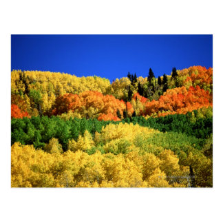 Autumn Landscape Postcard