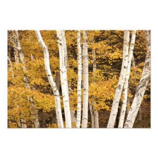 Autumn landscape, Vermont, USA 2 Photo Art