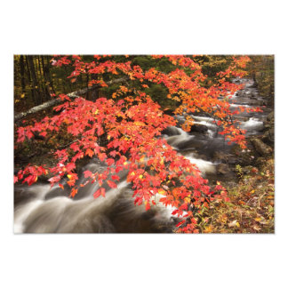 Autumn landscape, Vermont, USA 4 Photo Art