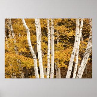 Autumn landscape, Vermont, USA Poster