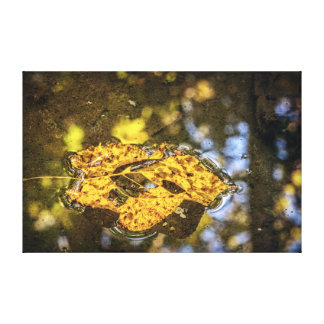 Autumn Leaf Floating on the Water Canvas Print