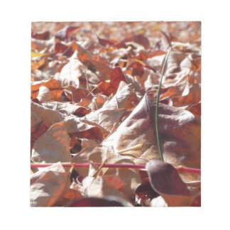 Autumn leaf in the fall notepad