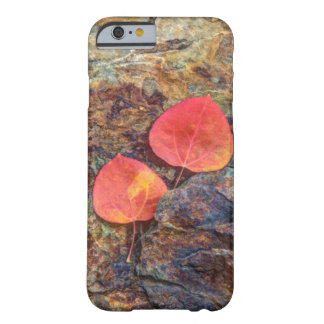 Autumn leaf on rock, California Barely There iPhone 6 Case