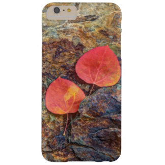 Autumn leaf on rock, California Barely There iPhone 6 Plus Case